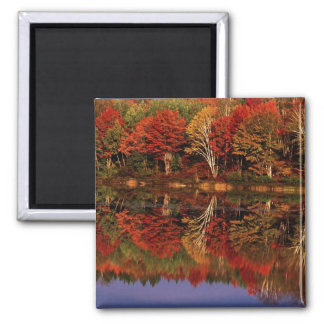 United States, Michigan, Upper Peninsula. Fall 2 Inch Square Magnet