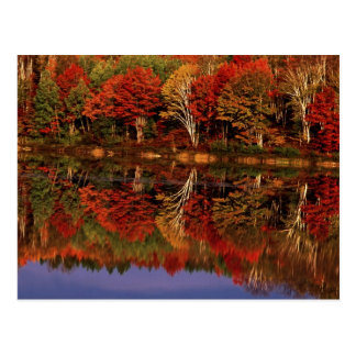United States, Michigan, Upper Peninsula. Fall Postcard