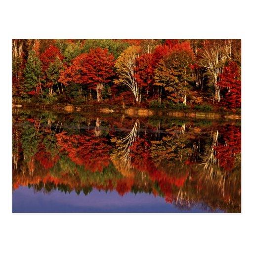 United States, Michigan, Upper Peninsula. Fall Post Cards