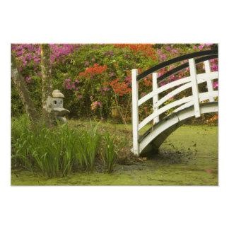 United States; South Carolina; Charleston; 2 Photographic Print