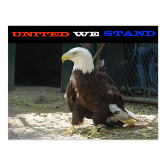 United We Stand Postcard!