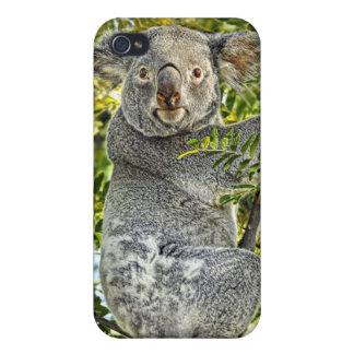 Universal del oso de koala #1 4 iPhone 4 cárcasas
