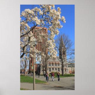 Universidad de Massachusetts Amherst en primavera Póster