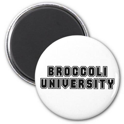 Universidad del bróculi imán de frigorífico