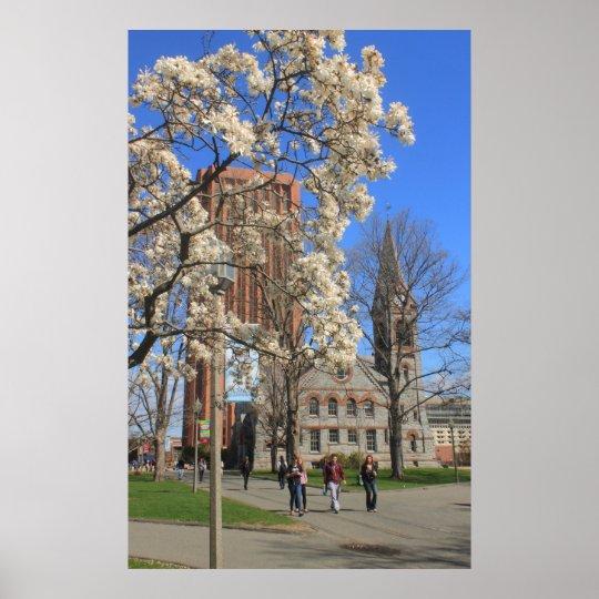 University of Massachusetts Amherst in Spring Poster