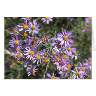 Unknown aster, Sequoia National Park Card