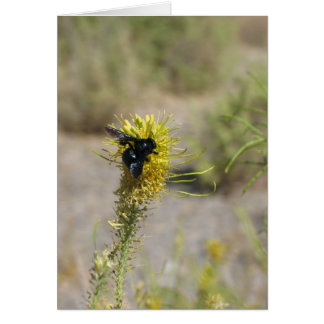 Unknown flower and insect, Death Valley Card