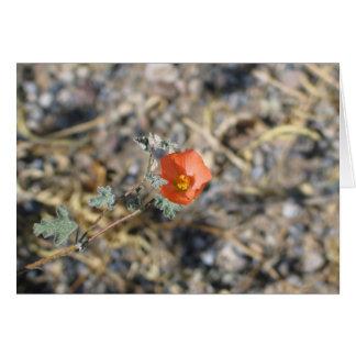 Unknown flower, Death Valley National Park Card