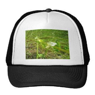 Unknown flower trucker hat