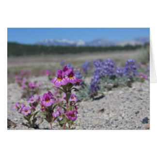 Unknown flowers and lupine, Yosemite National Park Card