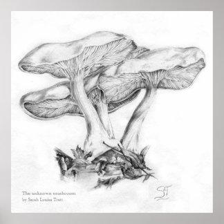 Unknown mushroom pencil  illustration square print