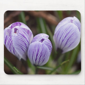 Unopened Crocuses Mouse Pad