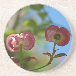Unopened Pink Dogwood Coaster