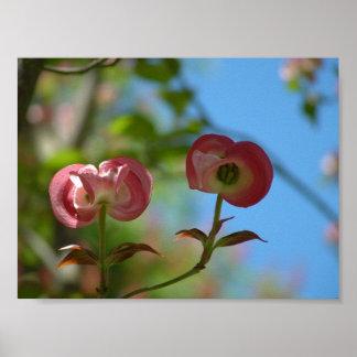 Unopened Pink Dogwood Print