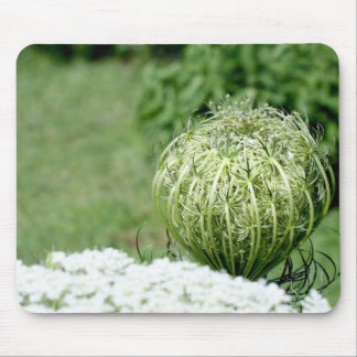Unopened Queen Anne's Lace Mousepad