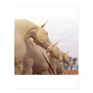 Unpainted Horses Postcard