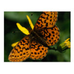 Unsilvered Fritillary Post Card