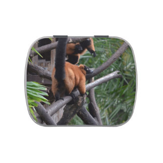 Unsuspecting Red ruffed lemur on branch Candy Tin
