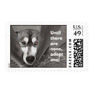 Until there are none, adopt one! postage stamp