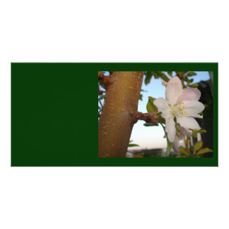 Untouched Apple Blossom Card