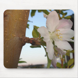 Untouched Apple Blossom Mouse Pad