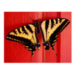 unusual background swallowtaill butterfly postcard