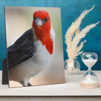 Unusual Cardinal Photo Plaques
