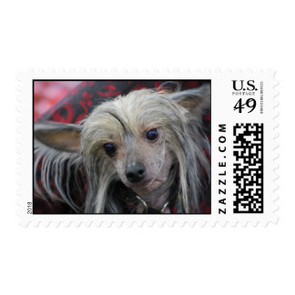 Unusual Chinese Crested Stamp