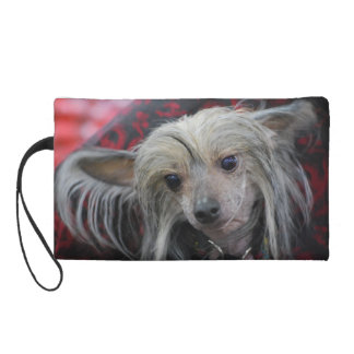 Unusual Chinese Crested Wristlet Purse