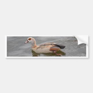 Unusual Duck Bumper Sticker
