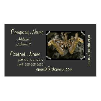 Unusual Moth Business Card