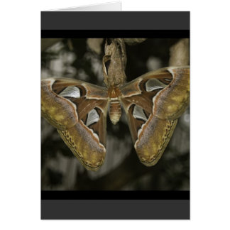 Unusual Moth Greeting Card