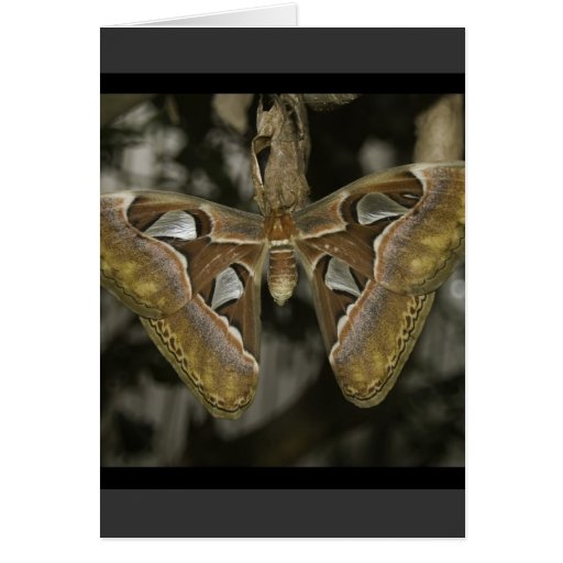 Unusual Moth Greeting Card