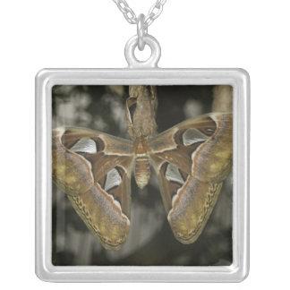 Unusual Moth Necklace