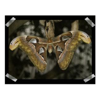 Unusual Moth Postcard