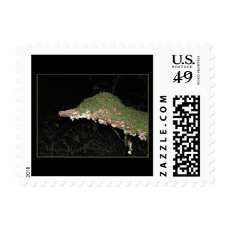 Unusual Vegetation in the Woods. Postage Stamps