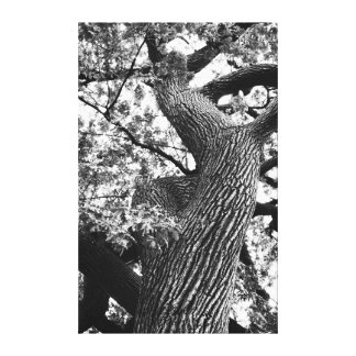 Up a Salem Tree Stretched Canvas Print