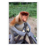 Up close and personal with male Proboscis monkey Greeting Cards