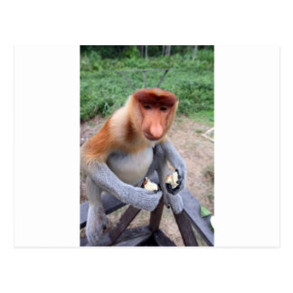 Up close and personal with male Proboscis monkey Postcard