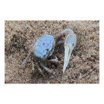 Up Close & Dirty ! !  Fiddler Crab Poster