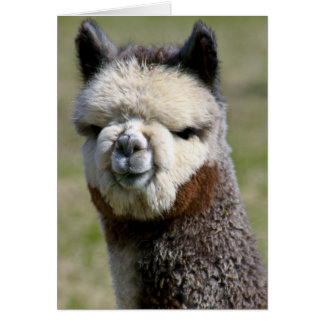 Up Close Grey Alpaca Card
