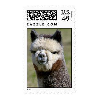 Up Close Grey Alpaca Stamp