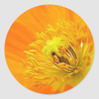 Up Close - Iceland Poppy Classic Round Sticker