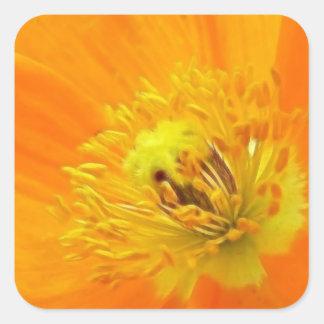 Up Close - Iceland Poppy Square Sticker