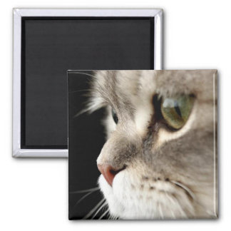 Up-Close Kitty Magnet