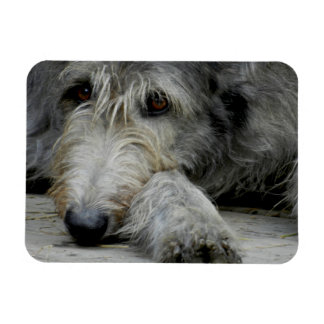 Up Close Magnet | Lurcher Magnet