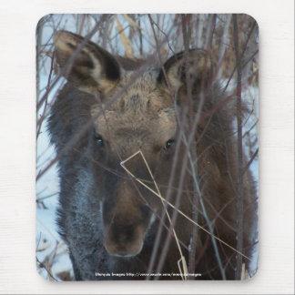 Up close moose calf mouse pad
