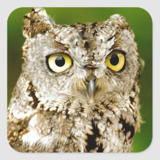Up close photo of an Owl Square Sticker