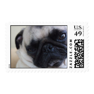 Up-close Pug Postage
