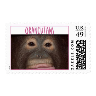 Up Close with Orangutans Postage
